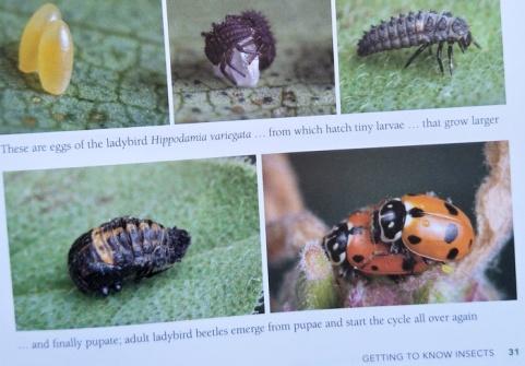 ladybirds book