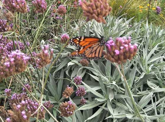 Sophies butterfly_tn