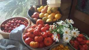 fruitbowls